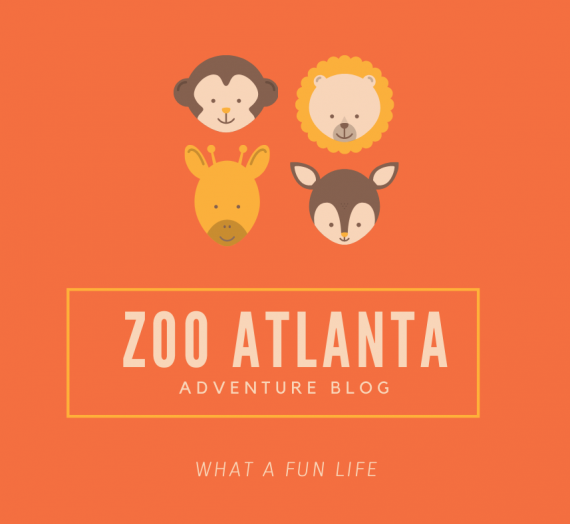 We Went to Zoo Atlanta | Our Adventure in Pictures